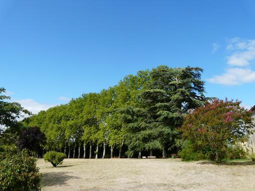 Allée de platanes en Dordogne