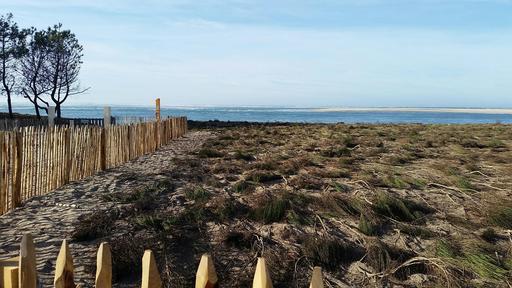 Aménagement de la dune de protection sur le littoral