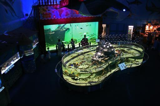 Aménagement intérieur d'un aquarium public