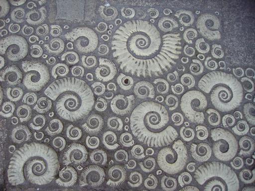 Ammonites et pierre de Coade