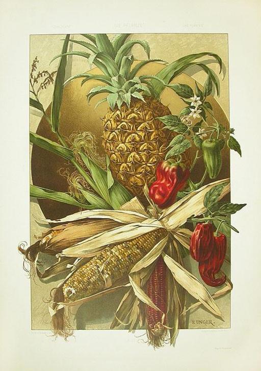 Ananas, maïs et poivrons