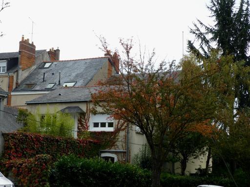 Angers, Couleurs d'automne dans les jardins