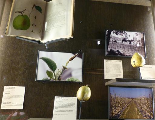 Angers et l'horticulture