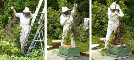 Apiculteur et essaim d'abeilles