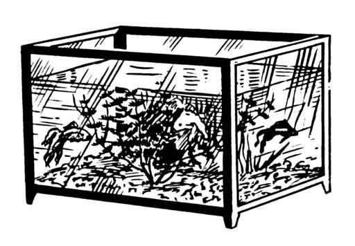 Aquarium du XIXème siècle