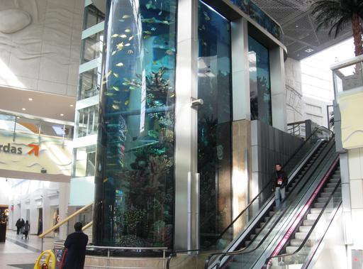 Aquarium géant dans un supermarché