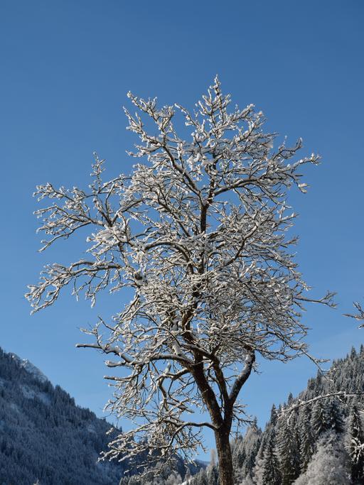 Arbre enneigé au Tyrol