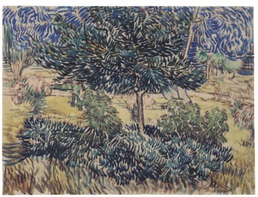 Arbre et arbustes dans le jardin de l'asile