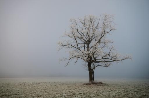 Arbre solitaire sous la neige en Autriche