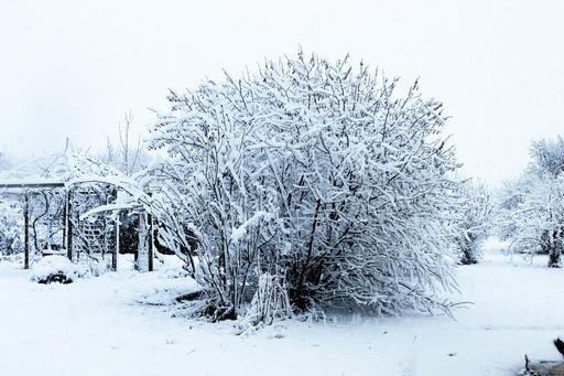 Arbres sous la neige dans un jardin