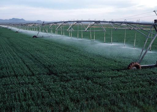 Arrosage d'un champ de blé en Arizona