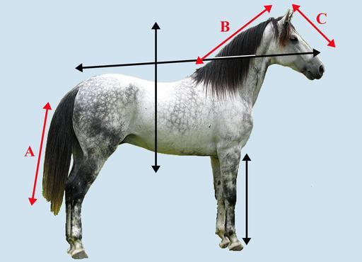 Axes d'orientation d'un cheval