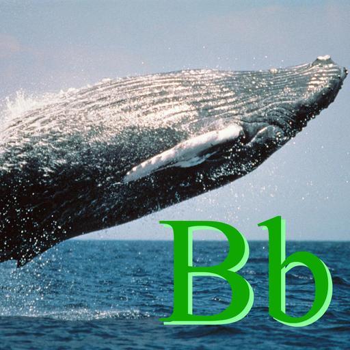 B pour Baleine