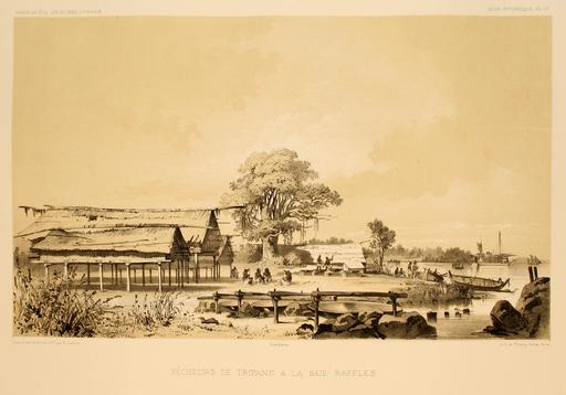 Baie de Raffles en Australie en 1838