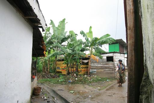 Bananiers dans une ruelle de Bessengue à Douala