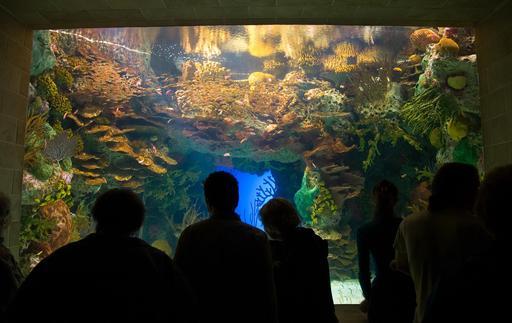 Bassin d'aquarium tropical