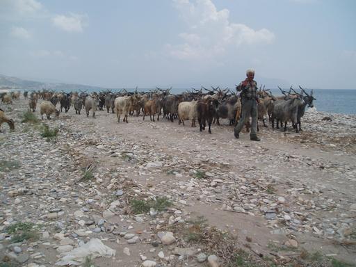 Berger et troupeau de chèvres en Grèce