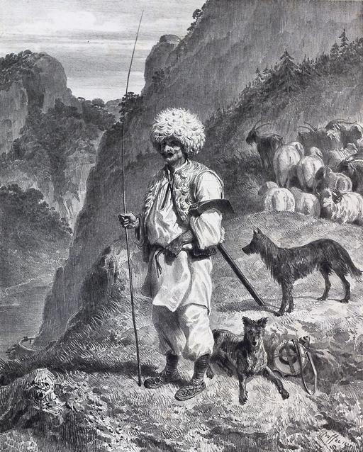 Berger hongrois du Banat