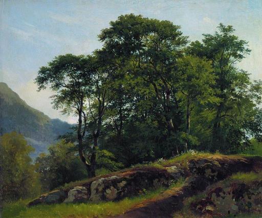 Bois de hêtres en Suisse