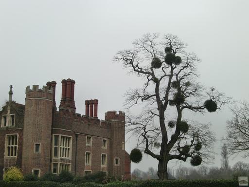 Boules de gui au château