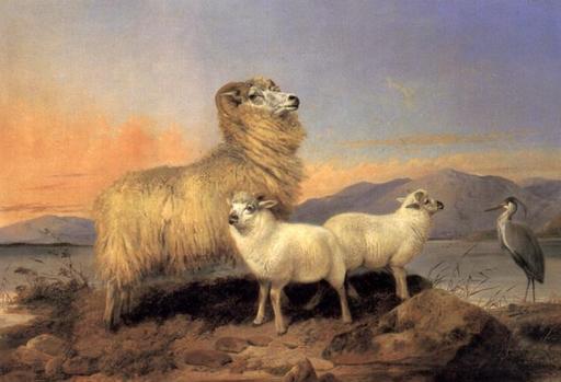 Brebis et deux agneaux en Écosse