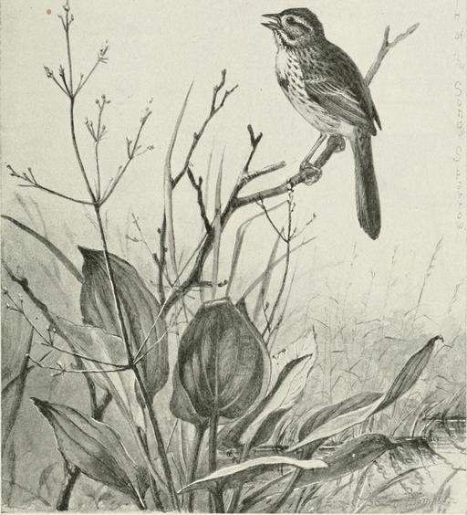 Bruant chanteur en 1899