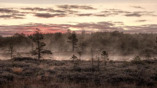 Brume matinale en Estonie