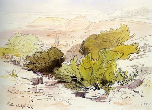 Buissons dans un oed à Petra en Jordanie