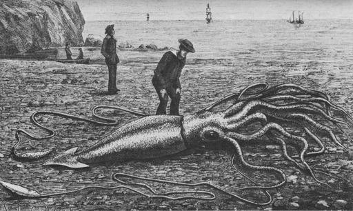 Calamar géant échoué