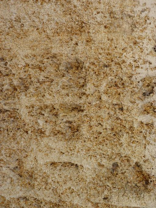 Calcaire à astéries, dit pierre de Bordeaux