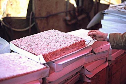 Carrés alimentaires de Krill