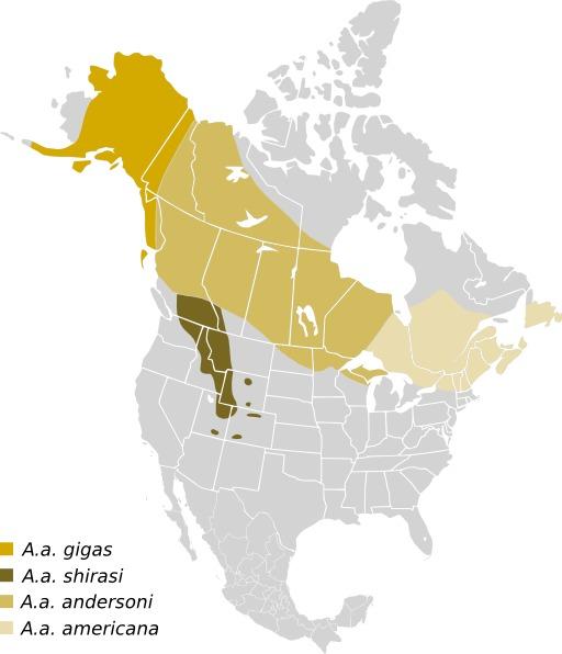 Carte de répartition des élans en Amérique du Nord