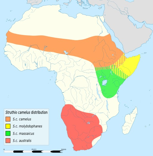 Carte légendée de répartition des autruches en Afrique