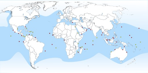 Cartographie des lieux de ponte des tortues vertes