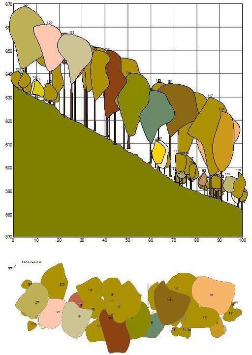 Cartographie forestière