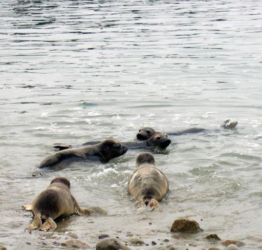 Centre des mammifères marins