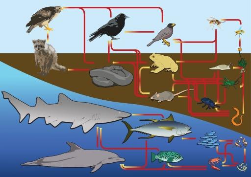 Chaîne alimentaire entre mer, terre et air