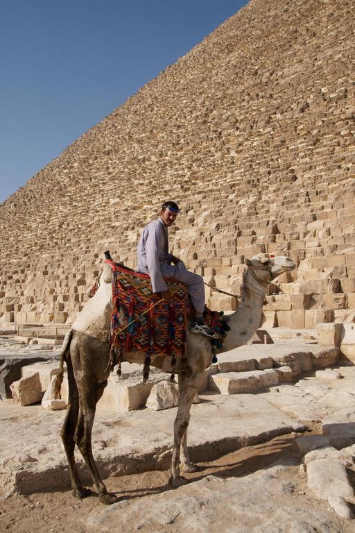 Chameau devant la pyramide de Chéops