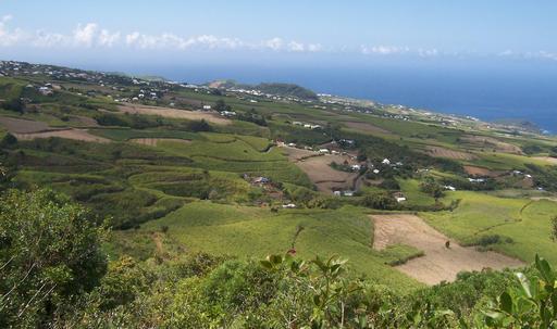 Champs de canne à sucre à La Réunion