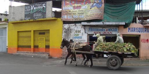 Charrette tirées par des mules