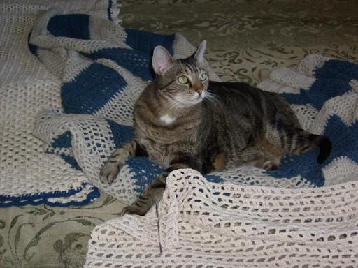 Chat et couvertures en crochet