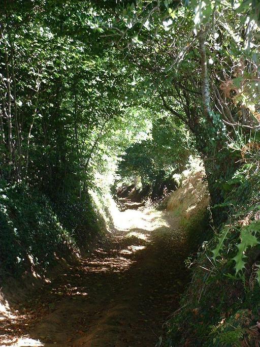 Chemin creux dans l'Orne