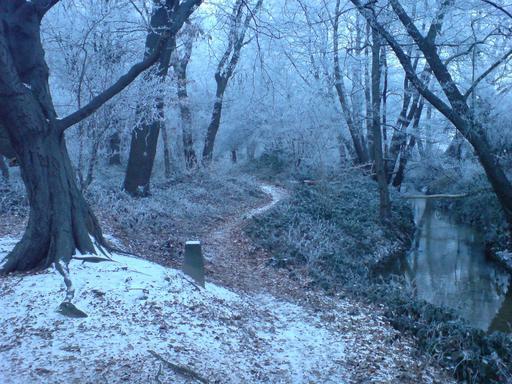 Chemin forestier en hiver
