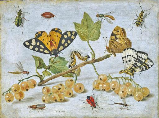Chenilles, papillons et insectes en 1653