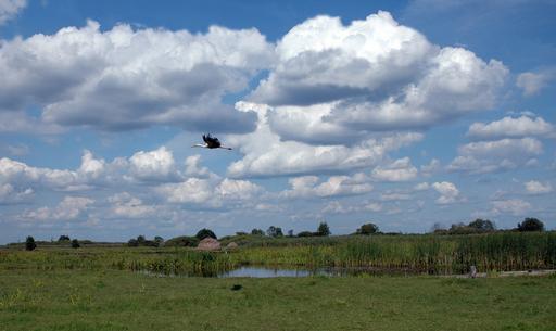 Cigogne en vol en Ukraine