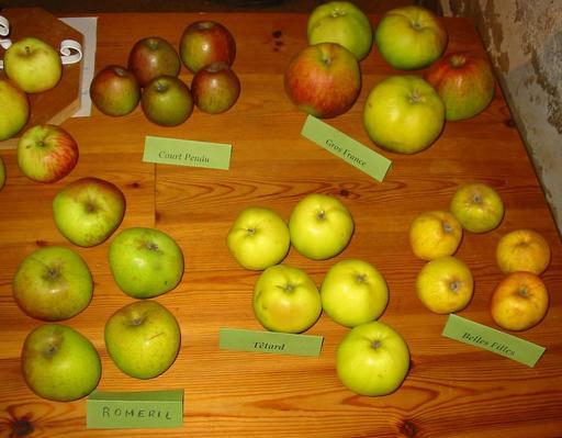 Cinq variétés de pommes