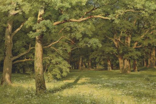 Clairière dans une forêt de chênes