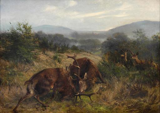 Combat de cerfs