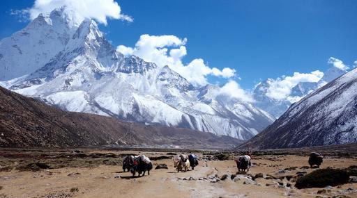 Convoi de yaks dans l'Himalaya
