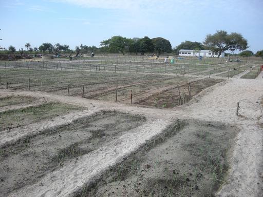 Coopérative agricole dans l'île de Carabane
